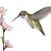The Low Down On The Google Algorithm's: The Hummingbird Update