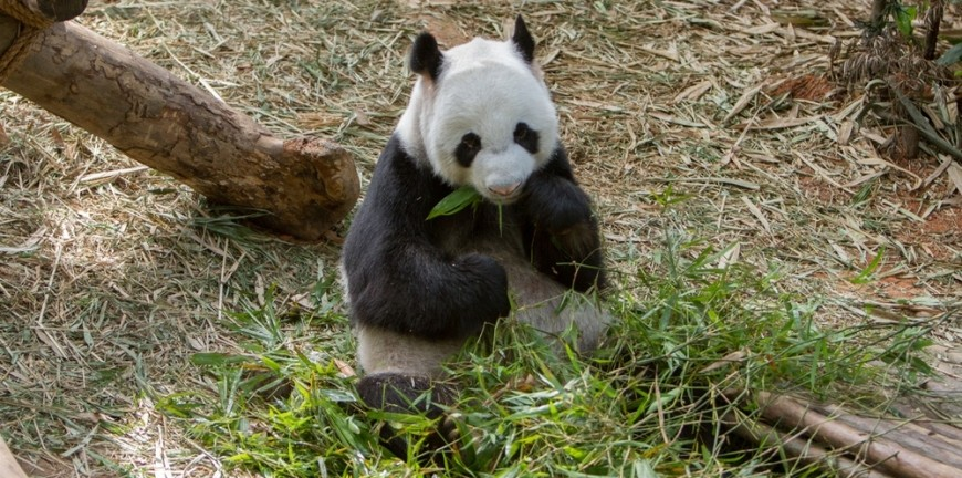 The Low Down On The Google Algorithm's: The Panda Update
